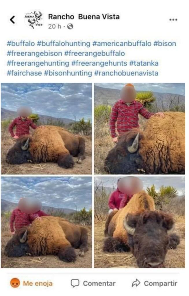 caza-de-bisontes-causa-indignacion-en-redes-sociales