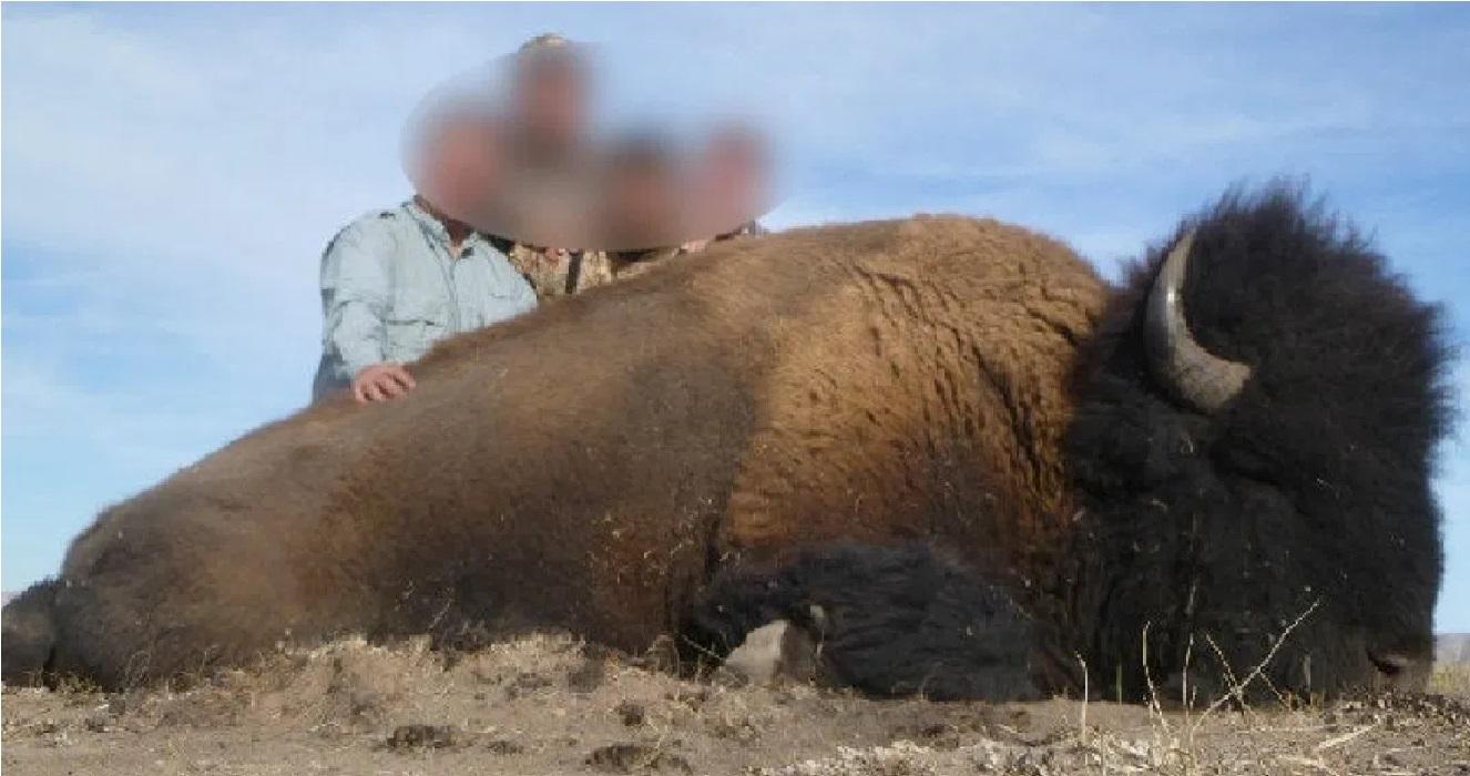 La caza de un bisonte americano en Coahuila indigno a las redes sociales || FOTOS