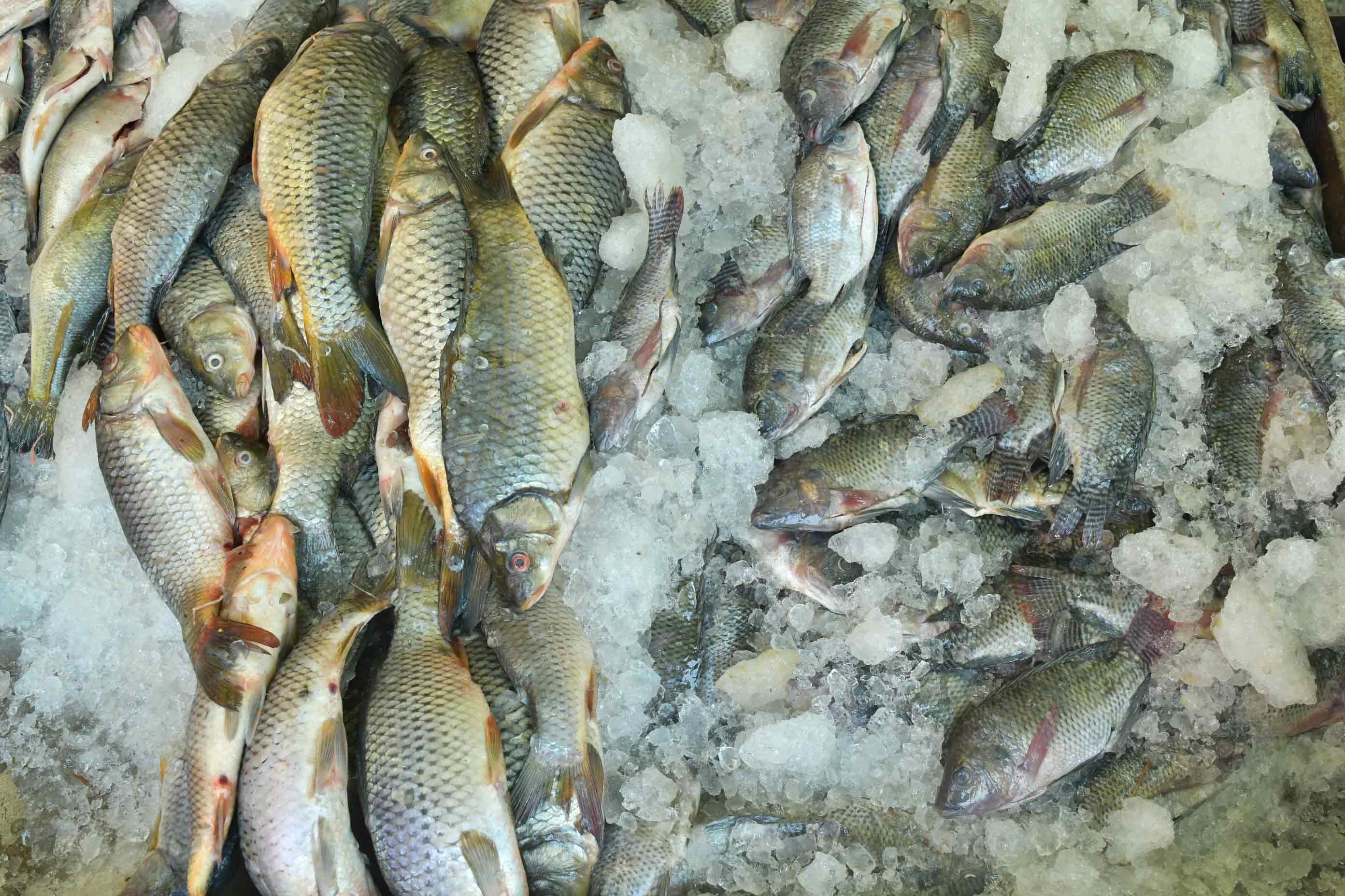 pescados-congelados
