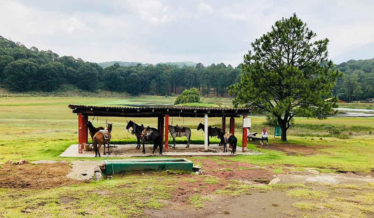 El Parque ecoturístico El Ocotal se ubica en el Edomex y es una buena opción para visitar un fin de semana y despejarse un poco rodeado de naturaleza