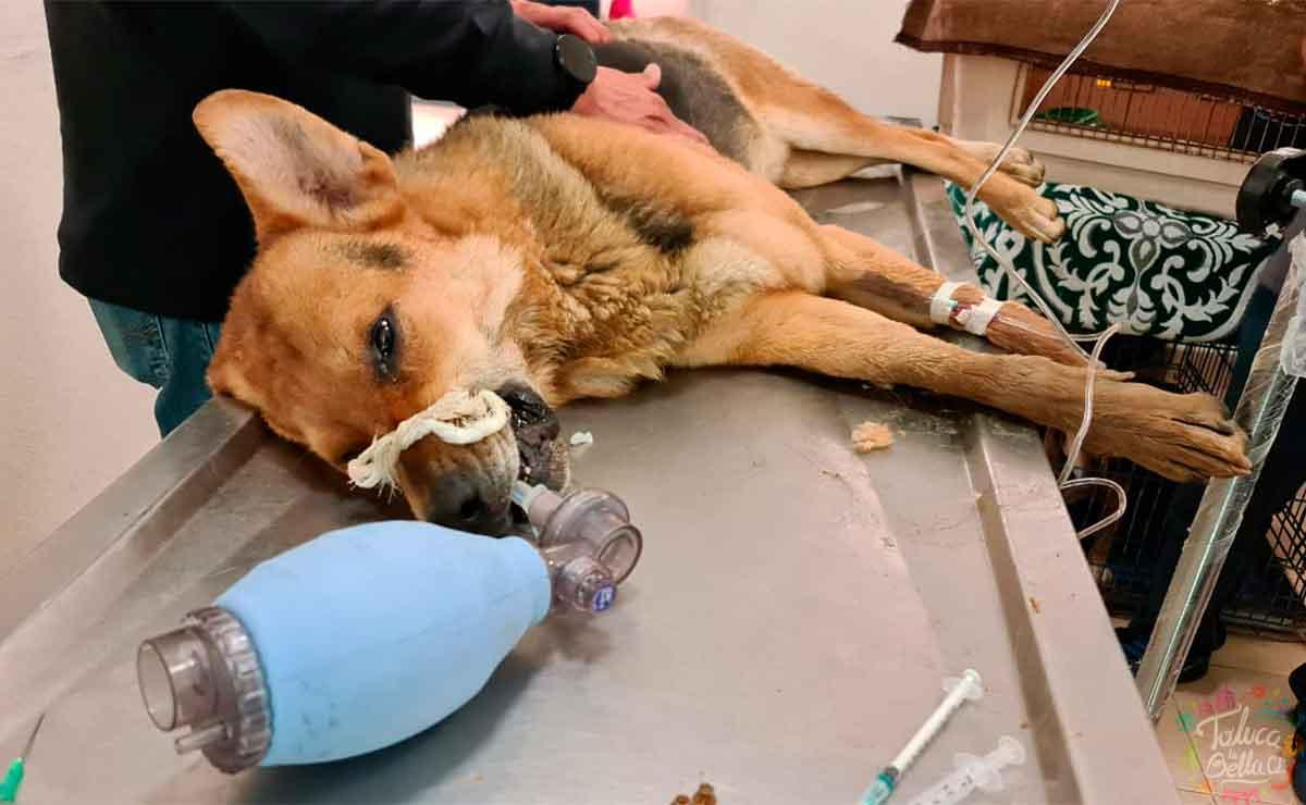 Toluca: Autoridades piden denunciar maltrato animal tras el fallecimiento de varios perritos