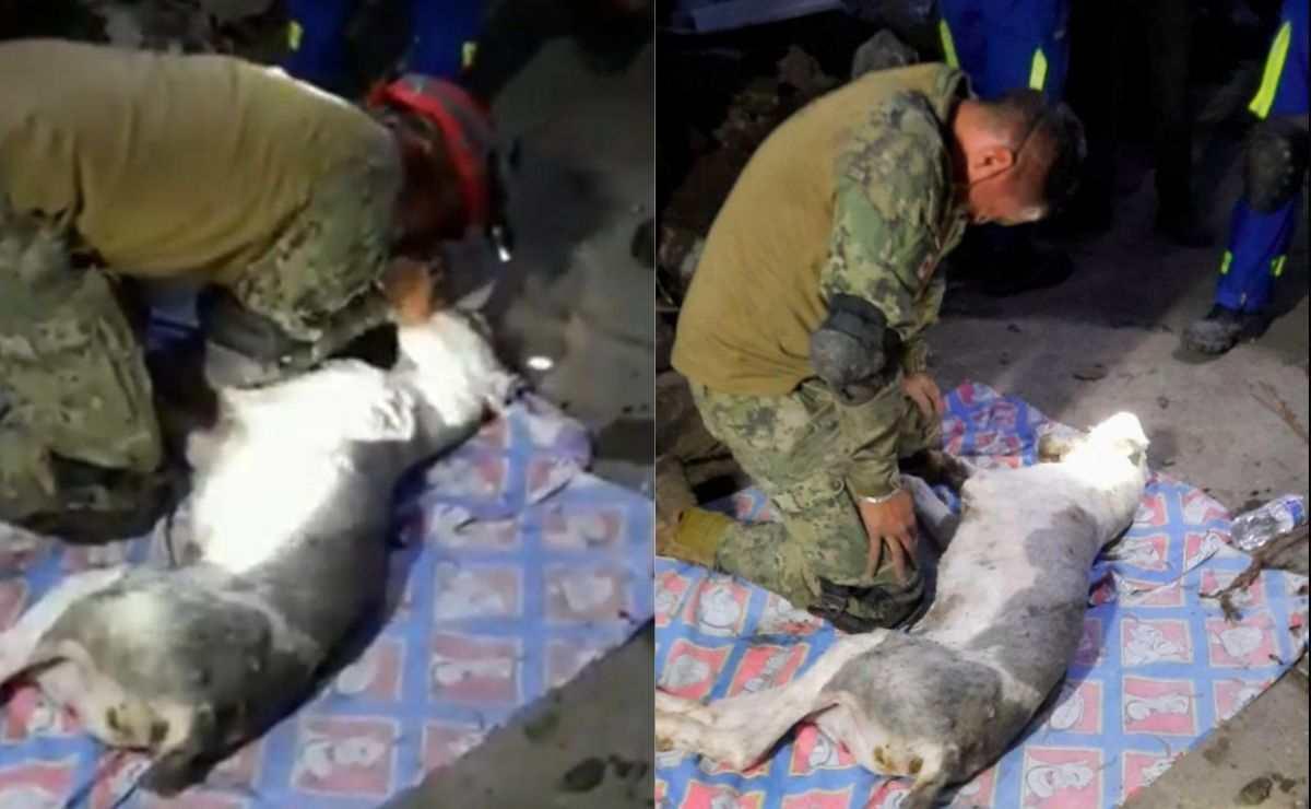 Marino intenta salvar la vida a perrito tras deslave en Cerro del Chiquihuitee