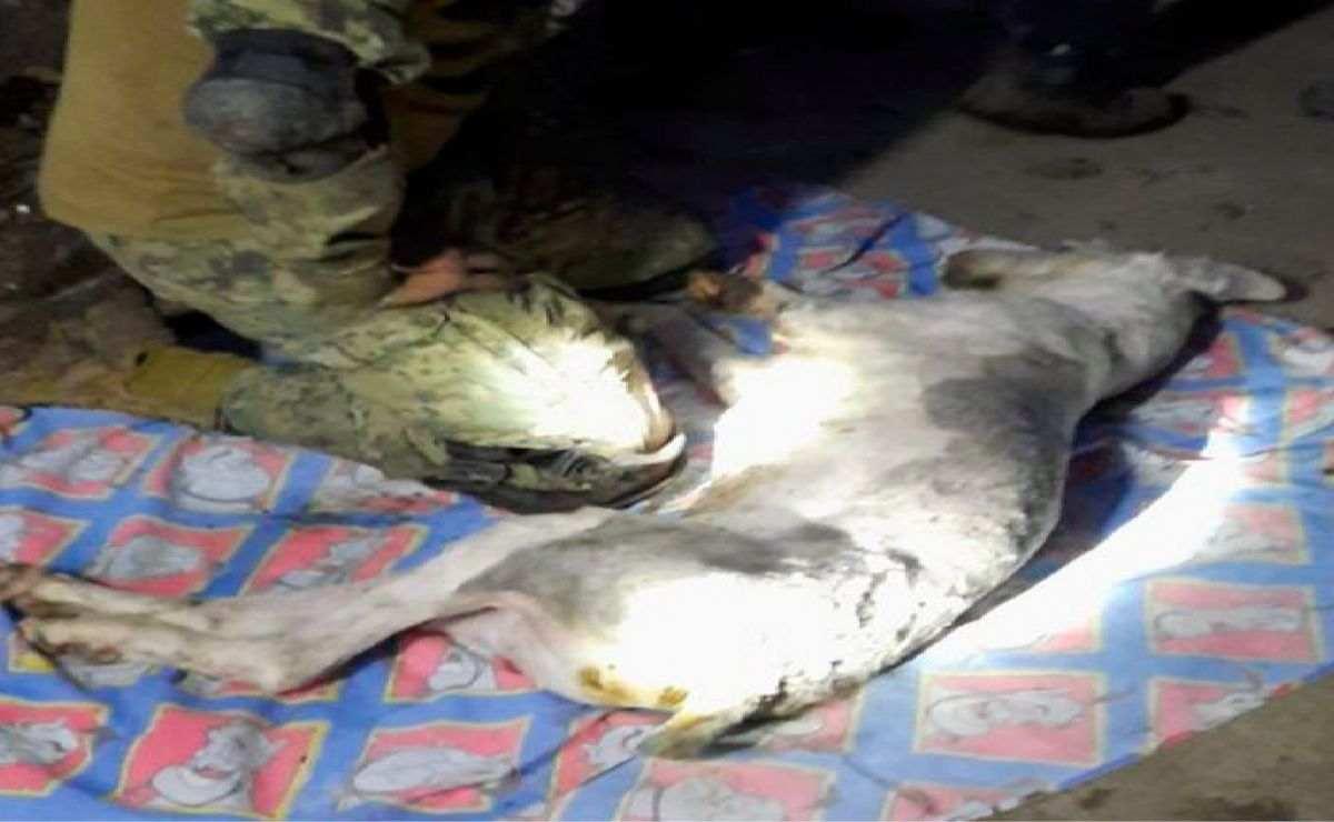 Marino hace todo lo posible por salvar vida de un perrito tras derrumbe en cerro del chiquihuite