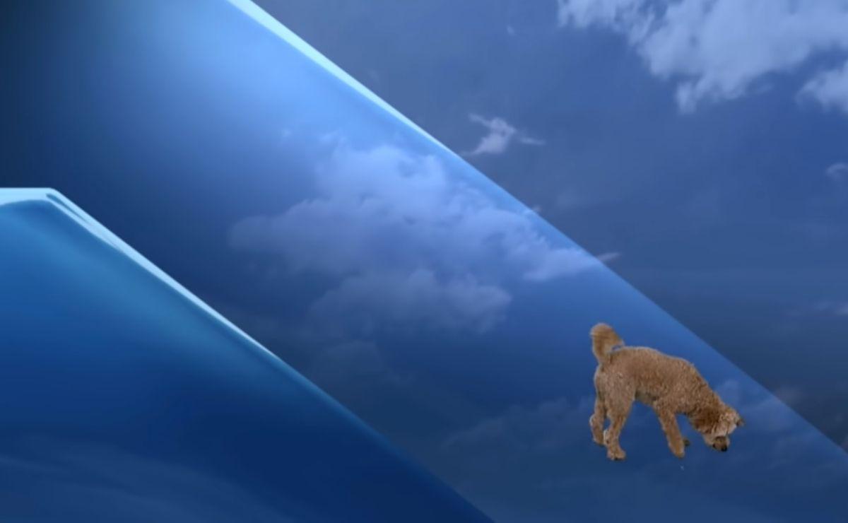 el presentador Anthony Farnell se encuentra dando el clima cuando de la nada aparece su perrito a cuadro